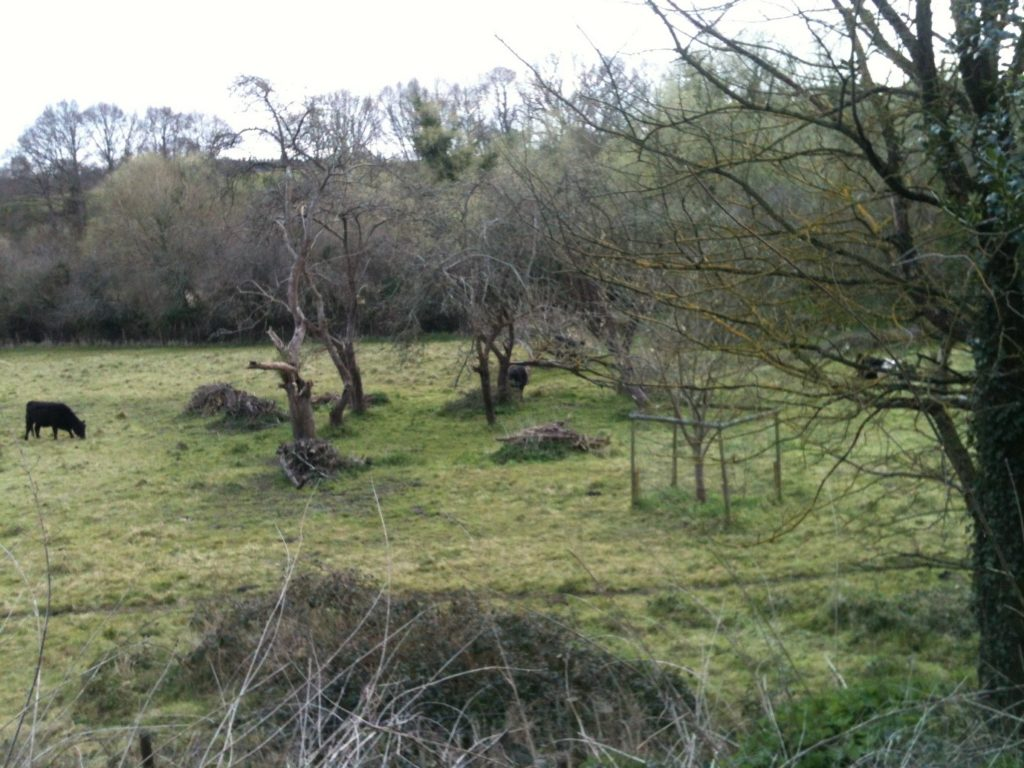 Smallbrook Nature Reserve Orchard